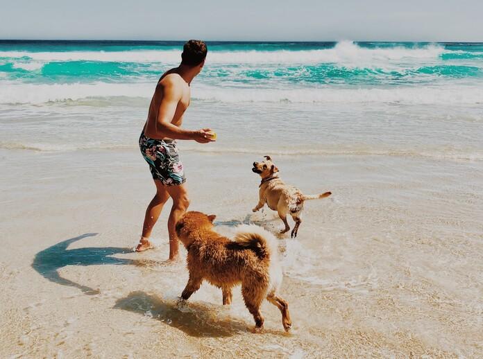 comment-rafraichir-chien-eau-plage