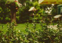 conseils creer jardin ecologique