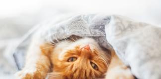 Partir en vacances quand on a un chat